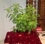Srimati Tulasi Devi