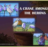 A Crane Amongst The Herons