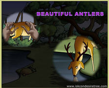 Beautiful Antlers