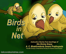 Birds In Net