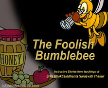 Foolish Bumble Bee