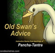 Old Swan Advice