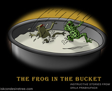 The Frog In The Bucket