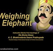 Weighing Elephant
