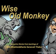 Wise Old Monkey