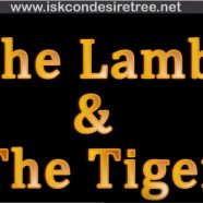 The Lamb & the Tiger