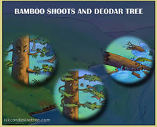 Bamboo Shoots And Deodar Tree