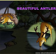 Beautiful Antlers