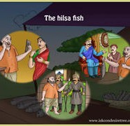 Gopal The hilsa fish