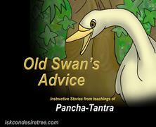 Old Swan Advice