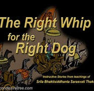 Right Whip For Right Dog