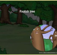 The Foolish Tree
