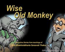 Wise Old Monkey